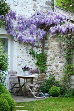 Wisteria on a stone wall.. my dream for any outdoor spaces. glicine su un muro di pietra #outodoors