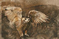Totemové zvíře   Centrum alternativního rozvoje
