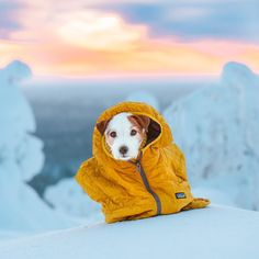 Jack Russell Puppies Jack russel puppy in Cold Winter Wonderland, in Patagonia Jacket. I Love Dogs, Cute Dogs, Awesome Dogs, Bull Terrier Dog, Jack Russell Terrier, Dog Life, Family Dogs, Best Dogs, Dog Breeds