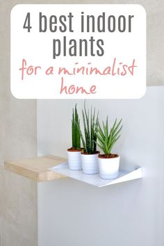 Unfussy and stylish best indoor plants perfect for a minimalist home and aesthetic Beautiful Space, Beautiful Homes, Best Indoor Plants, Small Homes, Simple House, Minimalist Home, Decorating Tips, Minimalism, Decor Ideas
