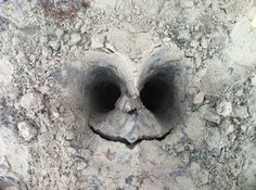 """This imprint that was left after someone was buried in sand. 