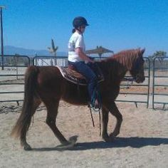 COCO is pending adoption..YAY!!   Coco is an adoptable Tennessee Walker Horse in Phelan, CA. If you are interested in this or any of our other available animals, please check out our website at www.Mustang-Spirit.org AKA: Coconut Coco...