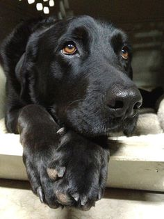 http://www.examiner.com/list/how-to-ease-your-dog-s-separation-anxiety-linked-to-back-to-school