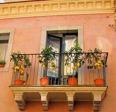 Lemons on a balcony in Taormina, Sicily