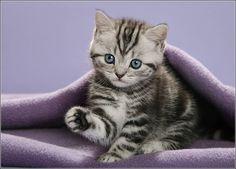 Cutie kitten!