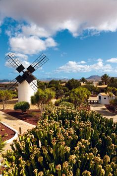 Place: #Antigua, #Fuerteventura / Canary Islands, #Spain. Photo by Traveler.es