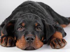 Votre chien a des puces ? Notre contributrice partage son astuce 100% naturelle pour le débarrasser des vilains envahisseurs.