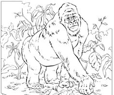 mountain gorilla coloring pages coloring pages for kids - Silverback Gorilla Coloring Pages