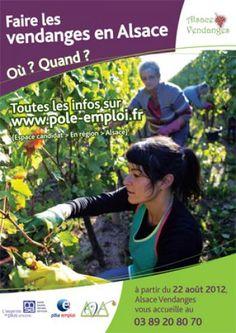 Vendanges 2012 en Alsace : où et quand ?