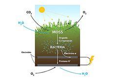 Biophotovoltaics Moss Planter Table