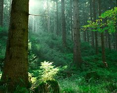 Thuringian Forest, Germany ~ the Heart of Germany