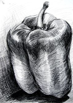 Bell pepper - charcoal. Note the different directions of the marks and lines to suggest 3-D form and the build up of hatching to achieve tone.: