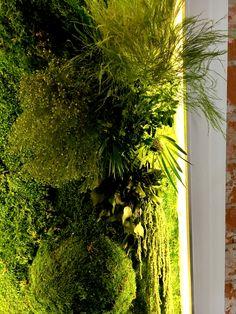 Panel z roślin stabilizowanych i mchu.