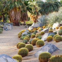 Mimic nature - Design with Cactus - Sunset