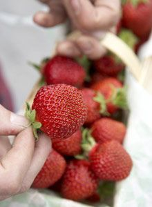 fresh Finnish strawberries - sweet and delicious!