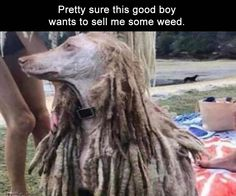 Tuesday LOL pictures Funny pics and memes PMSLweb Funny Weed Pictures, Funny Images, Cute Pictures, Cannabis, Weed Humor, Funny Animals With Captions, Funny Animal Photos, Humorous Animals, Funny Cats