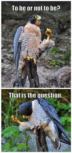 #BIRD_HUMOR: Shakespeare joke! :)) http://dunway.com/bird_package/index.html