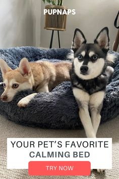 There's hundreds of dog bed options available and after months of testing and refining. We are confident we have made the most functional and useful design on the market... pet products dog,house pet,origami dog,dog accessories,pet odor,dog love quote,diy dog,puppy dog,little cats,puppy ideas,cute pets,adorable pet,diy dog memories,diy pet ideas dog,christmas dog,dog and cat treats,dog ids,dog stuff pet care,dog area,cat pets,pretty dog,pets ideas,love dogs, doggy bed, pet accessories Thing 1, Pet Odors, Dog Id, Diy Stuffed Animals, Dog Accessories, Pet Products, Pinterest Marketing, Your Pet, Cute Animals