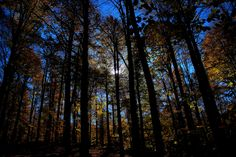 Forest by Mauro Granato on 500px