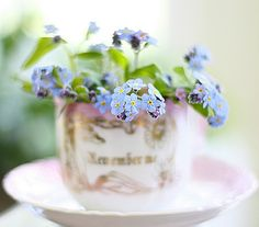 forget-me-nots...one of my favorite flowers