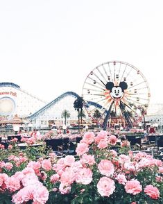 One week count down till Disneyland with the babysis @suzanneade