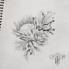 King Protea Sketch – The Order Custom Tattoos - Modern Protea Art, Flor Protea, Protea Flower, Cute Tattoos, Flower Tattoos, Native Tattoos, King Protea, Arm Tats, Botanical Tattoo