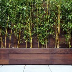 Bamboo Screen Design, Pictures, Remodel, Decor and Ideas