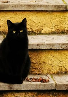 black kitty, please keep inside during Oct! too many are taken & harmed