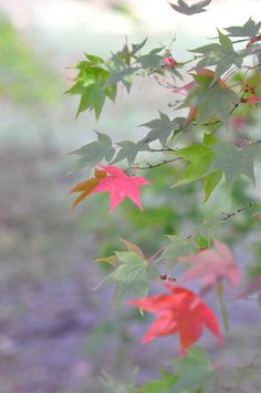 Fall Leaves - minimalist wall art in Fall colors, fine art photo for living room decor for bedroom. Westonbirt Arboretum is one of nature's treasure troves. I simply fell in love with this simple arrange of leaves. In fact, I love it so much I have it displayed in my own home! Being from the UK I called it Autumn in Pastel - its quiet, understated mood providing a soft, visual haven. I hope you - or someone you are buying a gift for - will love it too. Available in a range of sizes from 5…