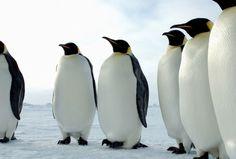 ペンギンの群れの壁紙 | 壁紙キングダム PC・デスクトップ版