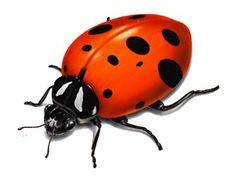 Ladybug Red Spotted Black