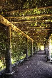 vine covered walkway - would love to use this idea for a carport