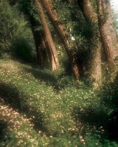 50 Ideas Nature Photography Forest Fantasy For 2019 Nature Aesthetic, Aesthetic Dark, Aesthetic Fashion, Spring Aesthetic, Aesthetic Pictures, Champs, Mother Nature, Countryside, Beautiful Places