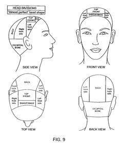 Anatomia del corte de cabello