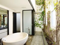 plants in the bathroom, lots of natural light