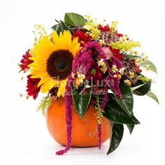 Gerbera, Pumpkin, Autumn, Vegetables, Plants, Impressionism, Pumpkins, Fall, Veggie Food