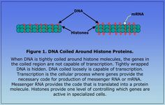 DNA coiled around histone proteins [agct sequencing blog]