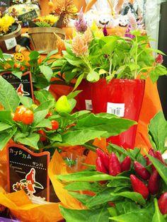 Arrangements of opening festive feel of the season@Hanadokei Tokyo