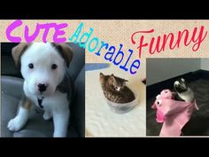Relaxing & Stress Relieving Cute Animals