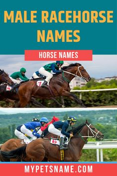 Braveheart is one of the names in our list of male Racehorse names, named after the courageous 13th Century Scottish warrior 'William Wallace', making this name brilliant for the bravest racehorse around. Find more in our list.  #racehorsenames #maleracehorsenames #horsenames Male Pet Names, Scottish Warrior, William Wallace, Braveheart, People Laughing, Thoroughbred, Horses, Pets