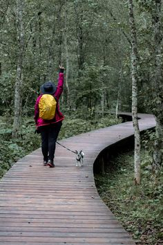 Mendlingtal – Ein Besuch im schönsten Tal des Mostviertel Jasmin, Kanken Backpack, Backpacks, Bags, Weather Report, Rainy Days, Exploring, Tours, Handbags