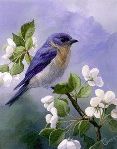 Bird Painting Acrylic, Watercolor Bird, Bird Drawings, Colorful Drawings, Wildlife Paintings, Landscape Paintings, Pretty Birds, Beautiful Birds, Art Mignon