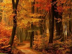 52 Ideas Photography Autumn Leaves Paths For 2019 Beautiful Places, Beautiful Pictures, Amazing Places, Beautiful Forest, Beautiful Mind, Autumn Scenes, All Nature, Autumn Nature, Fall Pictures