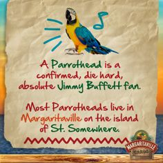 Repin if you are a #parrothead. #jimmybuffett #margaritaville