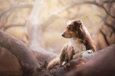 Esta fotógrafa polaca se ha especializado en retratar perros, ¡y no es para menos! porque lo hace genial.  #animales #pets #perros #dogs #pictures #mascotas