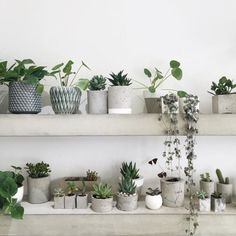 green plants and grey and concret planters / plantes vertes et pots gris et en béton! / Plants and Garden Indoor Plant Pots, Potted Plants, Small Indoor Plants, Indoor Succulents, Succulent Containers, Indoor Gardening, Decoration Plante, Deco Floral, Industrial Interiors