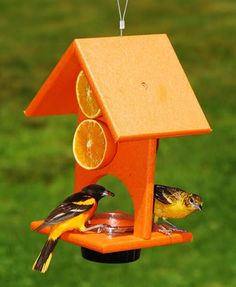 Orange  and jelly Oriole Feeder