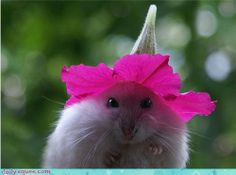 A hat is always a good idea!