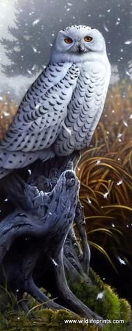 The beautiful snowy, white owl stands alert in a winter storm in this Jerry Gadamus Giclee print.