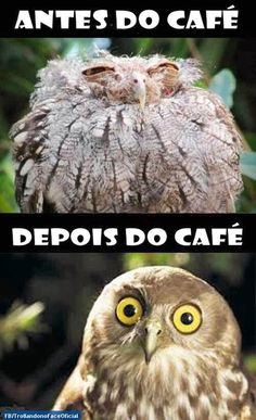 Trollando no Face Oficial: ANTES DO CAFÉ E...